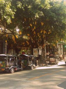 Árbore do mango en Chiang Mai