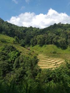 Terrazas de campos de arroz no Parque Natural de Doi Inthanon