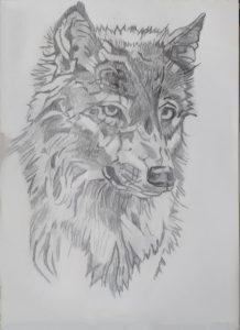 Debuxo da cara dun lobo